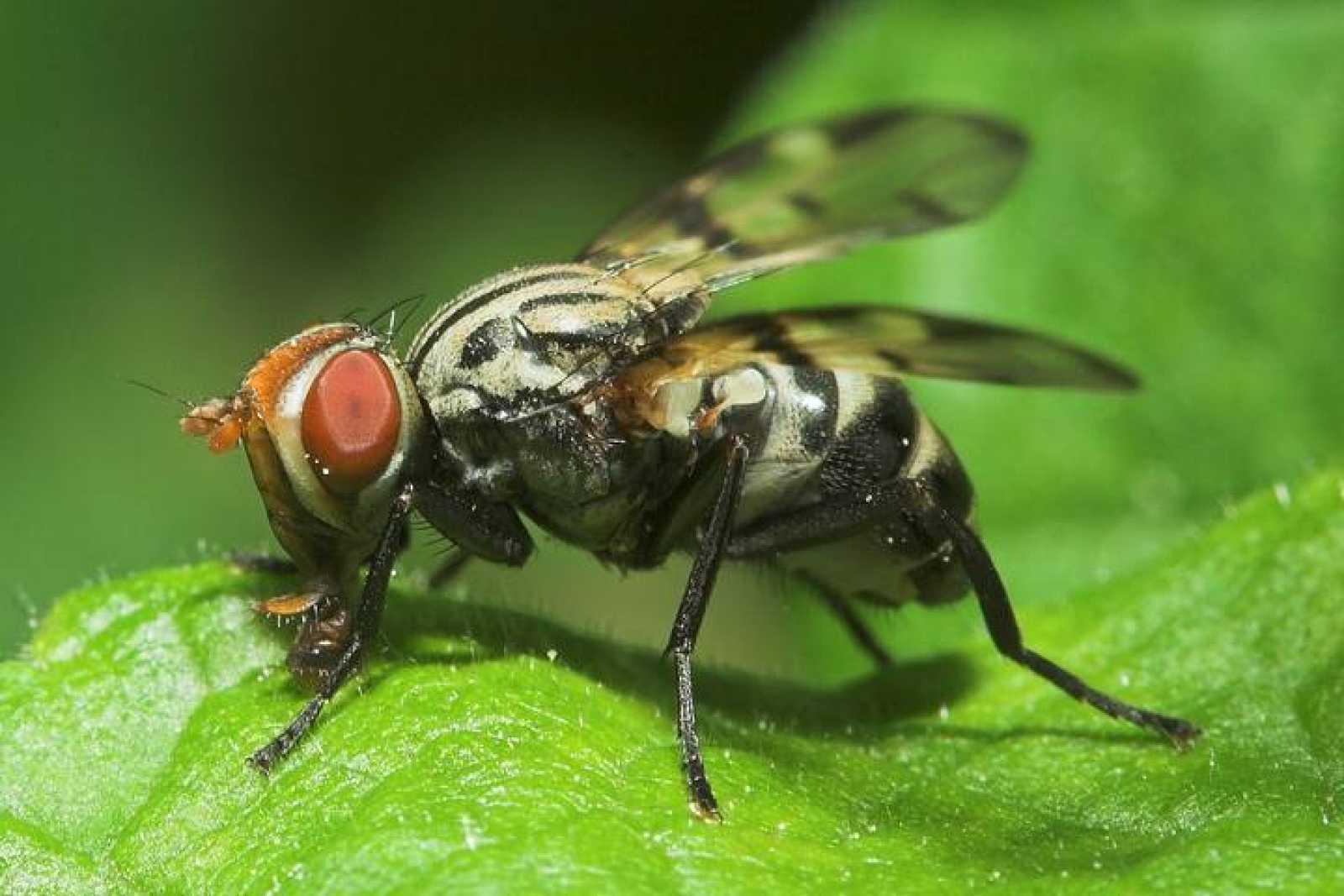 cazar y matar mosca es dificil matamoscas