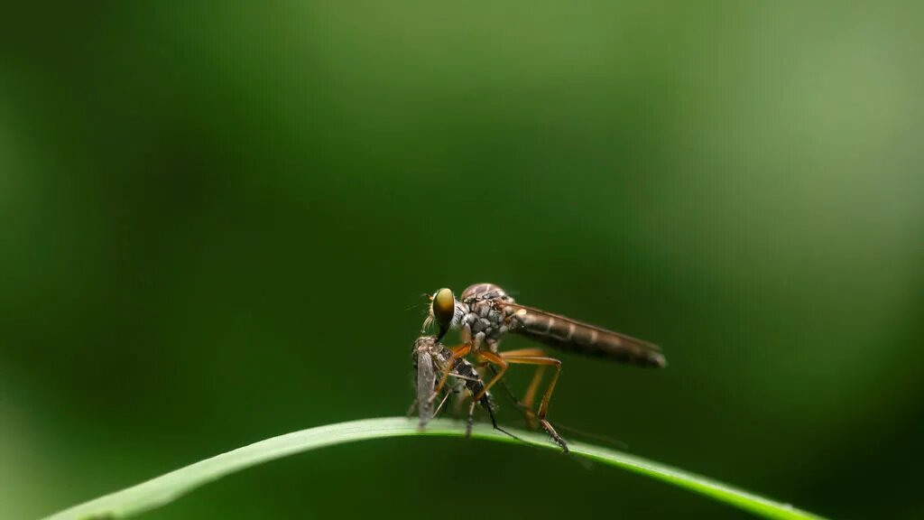 mosquitos y coronavirus